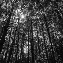Foret d'ombres