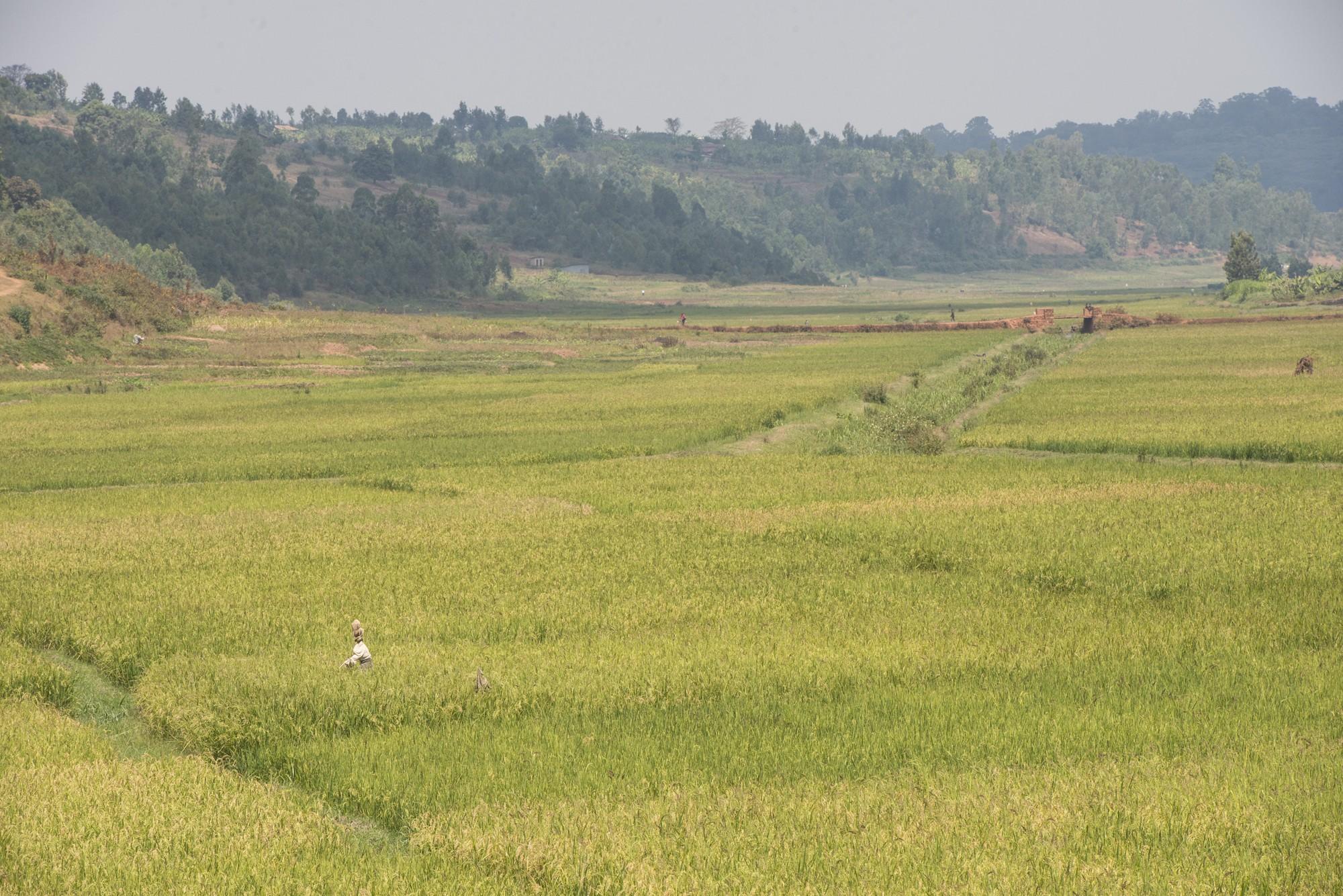 Route Cyangugu - Nyungwe