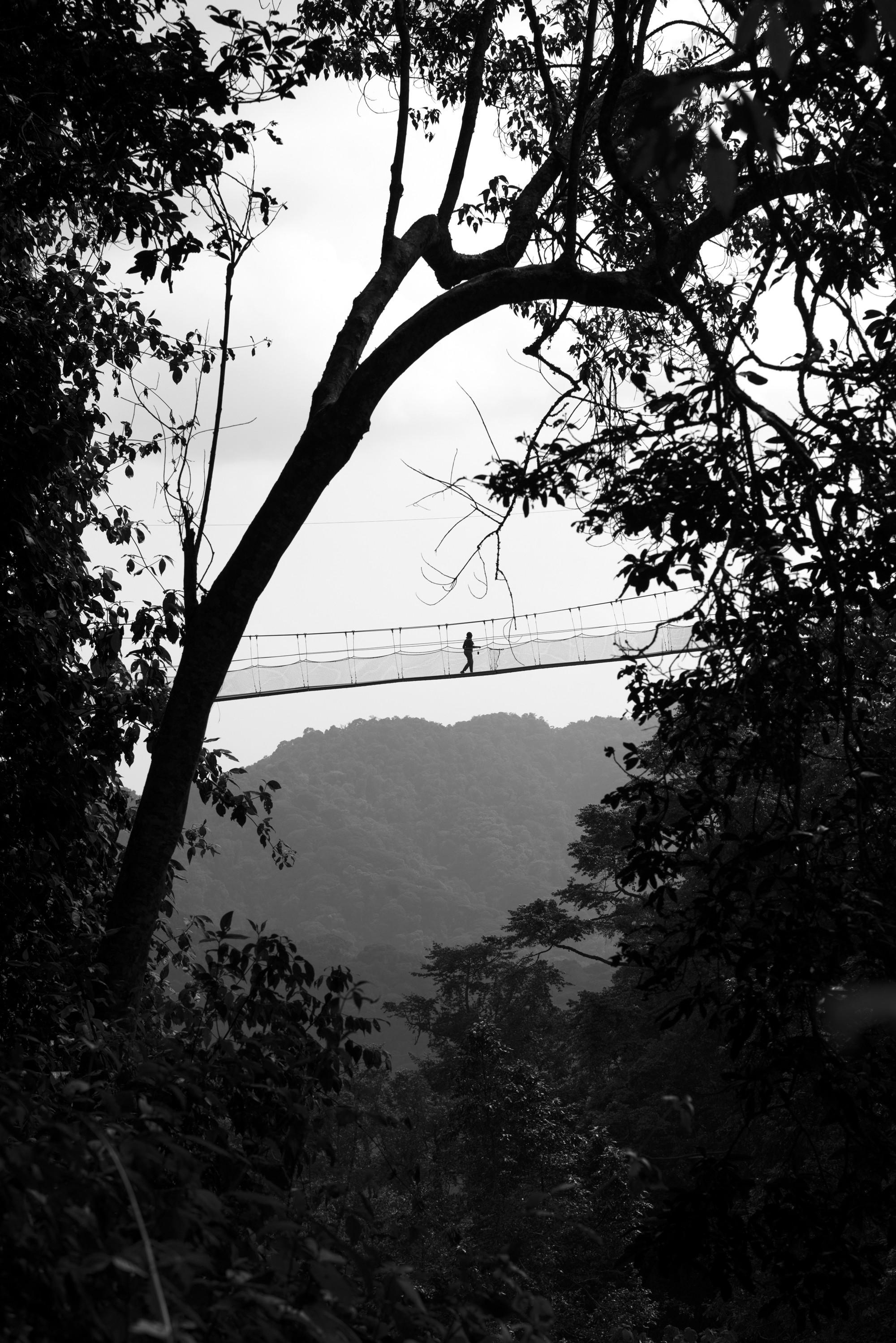 Nyungwe - Canope Walk