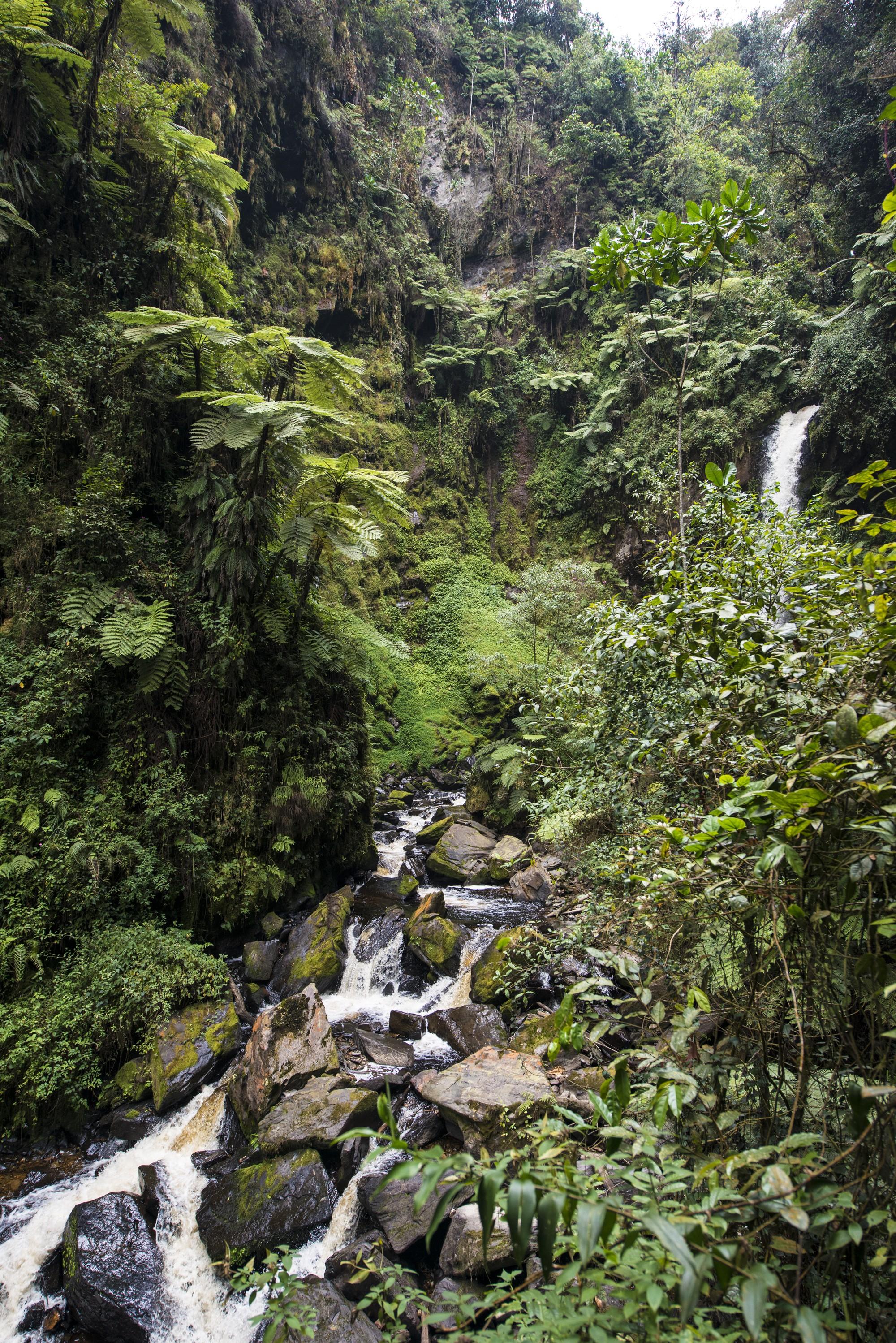 Nyungwe - Cascade de Kamiran